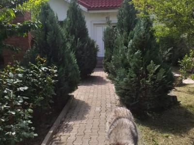 Casa single, strada Curcubeului, 2 min de Sos. Alexandriei Bragadiru